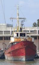 הניצן במעגן הדייג שביט