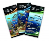 Guide to Identification of Marine Animals - St